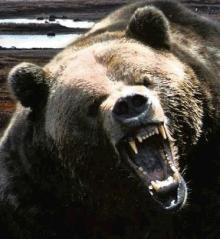 angrybear6