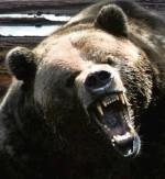 angrybear7
