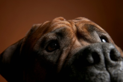 Dog close-up