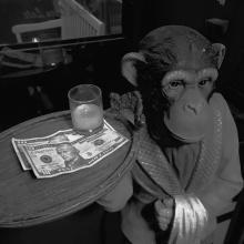 10 Dollar Monkey
