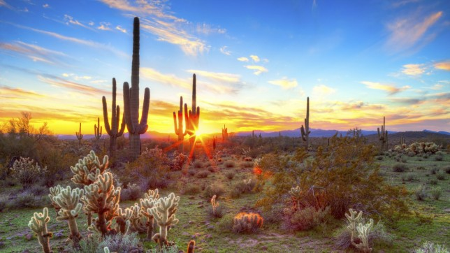 Arizona (desert, cactus)
