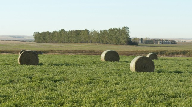 North Dakota (field)