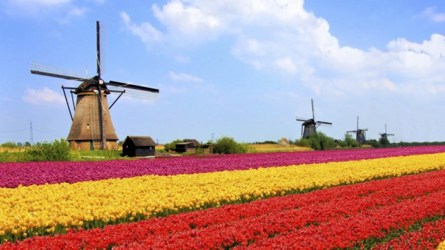 Tulip Fields, Netherlands
