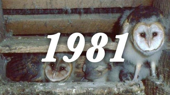 1981 barn owls