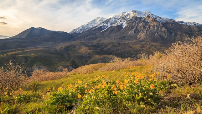 Provo Orem, Utah Valley wildflowers