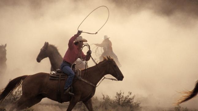 Cowboys Roping Horses