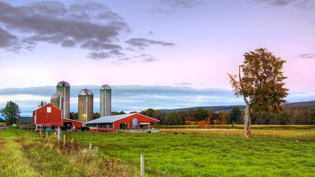 Red Barn at dusk with cows, Farm