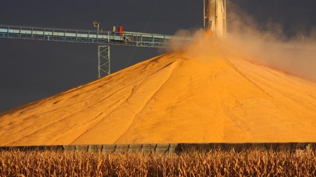 Striking Gold with Corn in Iowa