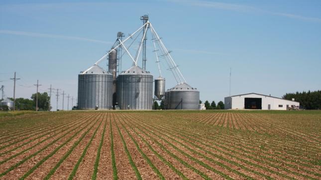 Nebraska Farm, Soybeans