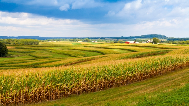Iowa farmland, corn