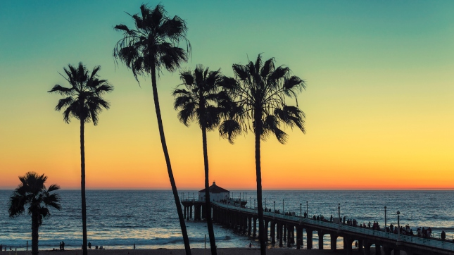 Palm trees at Manhattan Beach, Los Angeles County, California