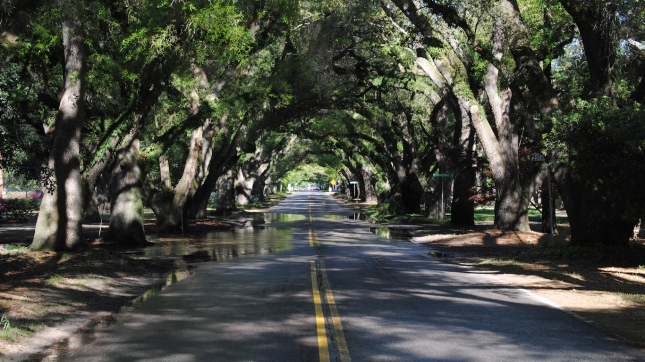 Road In Aiken, South Carolina after a summer shower.
