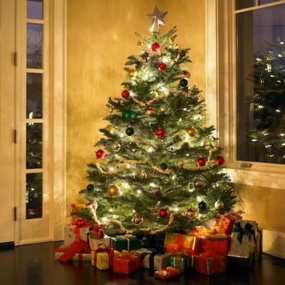 Illuminated Christmas tree in entrance hall