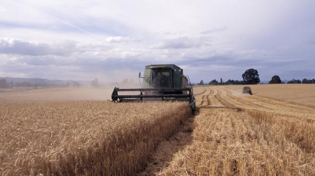 Machine Harvesting Wheat