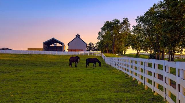 Horse farm at dawn, Kentucky