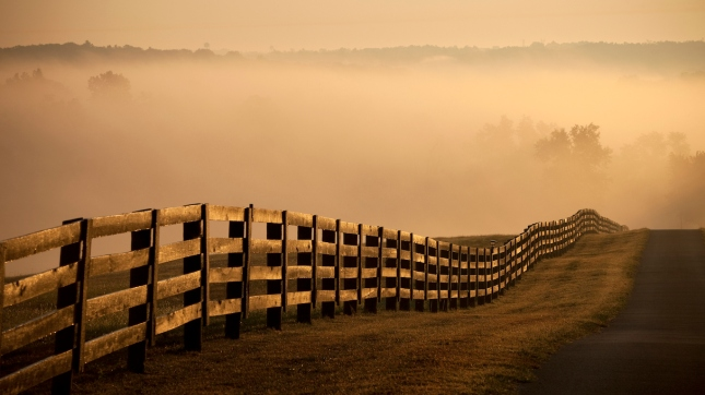 Farm Fence and road at sunrise with fog, Kentucky