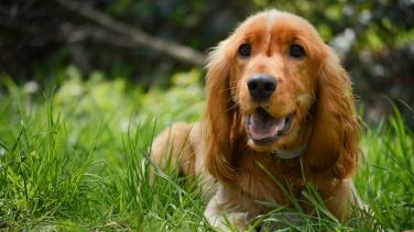 Top 10 Female and Male Dog Names   24/7 Wall St    Page 2