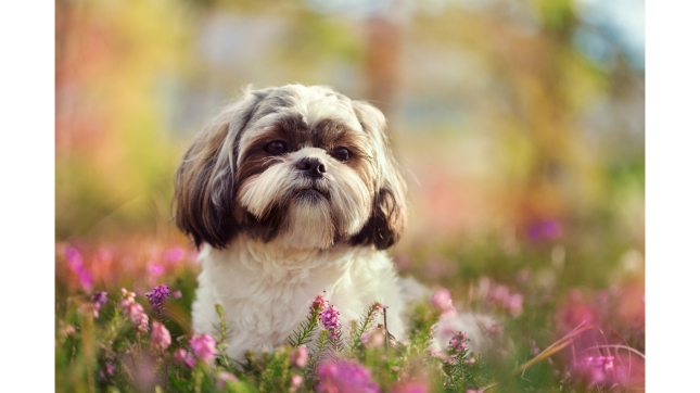 Dog Breeds Named After Cities
