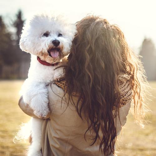 Best Dog Allergies Sufferers