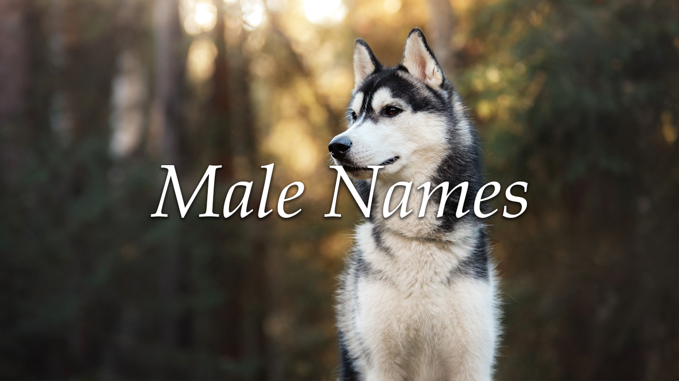 Top 10 Female and Male Dog Names   24/7 Wall St