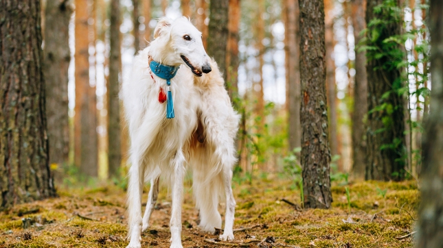 What Is The Longest Dog Breed Name