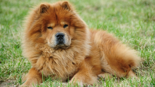 24/7 Wall St  » Blog Archive Most Expensive Cat and Dog Breeds «