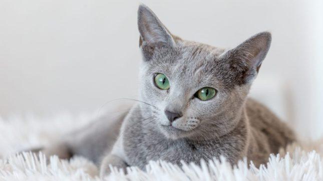 cat-ra