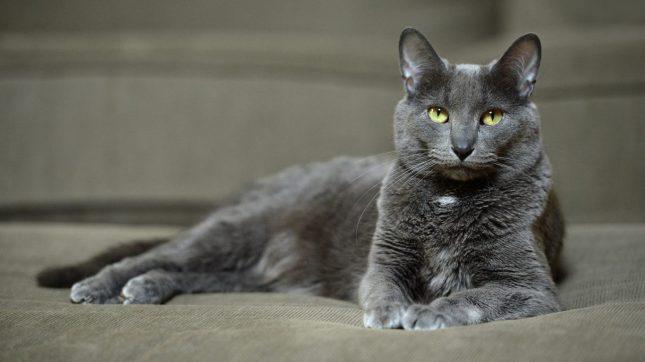Longest And Shortest Living Cat Breeds
