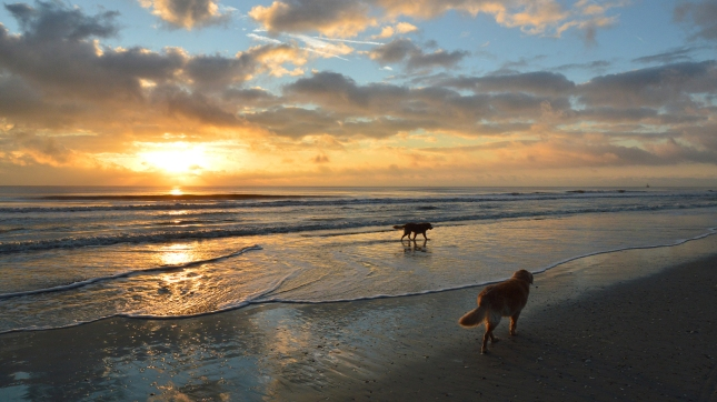 America's Worst States for Pets - 24/7 Wall St