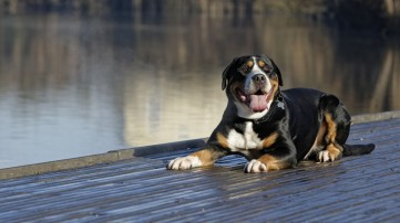 Americas Most Popular Dog Breeds 247 Wall St