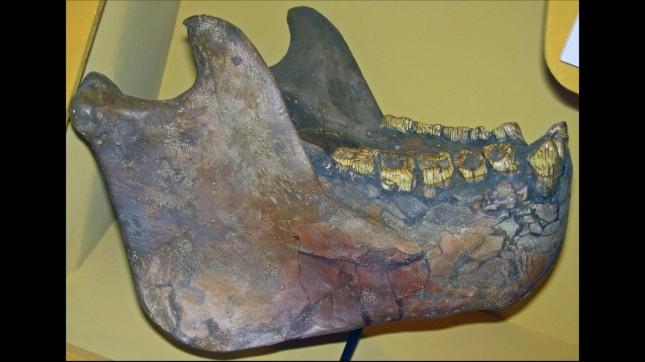 Gigantopithecus sp. (fossil ap... by James St. John