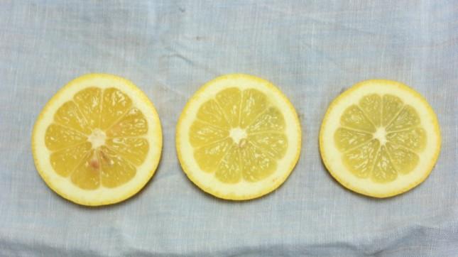 sliced lemons by _Libby_